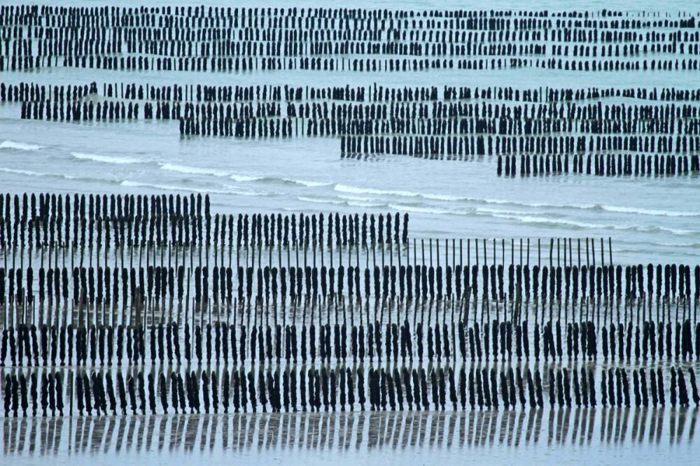 Paysage de bouchots dans la baie de Saint-Brieuc.